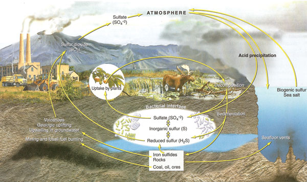 Diagram Of Where Sulfur Is Found